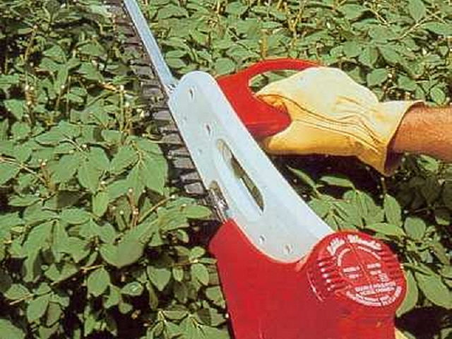 Where to find HEDGE TRIMMER, W CORD in Tupelo